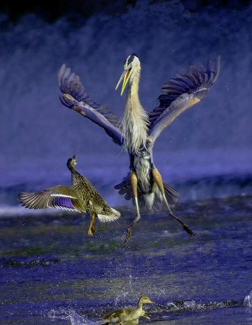 Best photos National Geographic Contest 2007 -  the animals